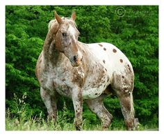 Sptted this very handsome horse near Harewood House. - See this image on Photobucket.