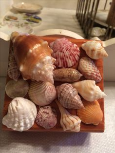 My Son made this little shell box with some of my favorites he found on our last trip to Sanibel ❤