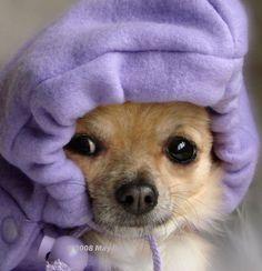 Cute Hoodie~
