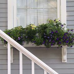 When mounting a window box, take its weight with full-grown plants and saturated potting mix into consideration. These sturdy, decorative brackets—painted to match the window trim—offer a vital means of support.