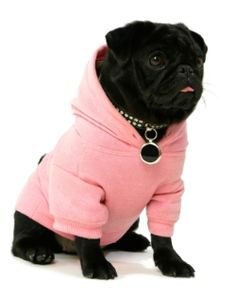 dog sweater, love the pink