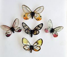 Butterfly Magnets Glasswings Wholesale Lot of 6 Refrigerator Magnets Insects