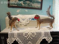 Squirrels, Venustiano carranza, Tamaulipas, Mexico