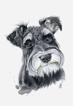 Looks like my Schnauzer Marty Animal Paintings, Animal Drawings, Schnauzer Puppy, Schnauzers, Miniature Schnauzer Puppies, Watercolor Animals, Dog Portraits, Dog Art, Dog Pictures