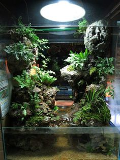Vivarium. Reduce the water around it for WTF.