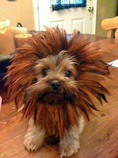 J'veux un nouveau coiffeur !!!!
