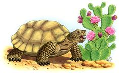 I have seen numerous suggestions for Russian tortoise diet Some great Some awful. Russian Tortoises are nibblers and appreciate broad leaf plants. Tortoise Drawing, Tortoise Tattoo, Tortoise Care, Giant Tortoise, Kawaii Turtle, Turtle Images, Russian Tortoise, Turtle Painting, Turtle Love