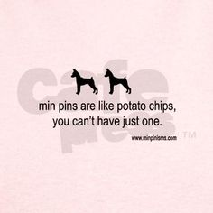 Min Pin Philosophy- So true, I love my two min pins Cleo and Pru.