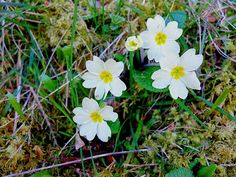 Fotografia - Comunidad - Google+ Primaveras.
