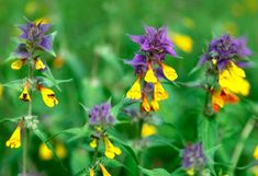 Lehtomaitikka Ferns, Wild Flowers, Nature, Plants, Naturaleza, Wildflowers, Plant, Nature Illustration, Off Grid