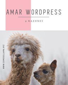 Wordpress es nuestra plataforma favorita. Estás son algunas razones por las cuales amamos este CMS sobre cualquier otro.