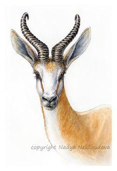 African antelope - Springbok portrait - Art Print of original Watercolour and Ink Painting - - wildlife art Watercolor Animals, Watercolor And Ink, Animal Drawings, Art Drawings, Horse Drawings, Drawing Art, Portrait Art, Painting Portraits, Ink Painting
