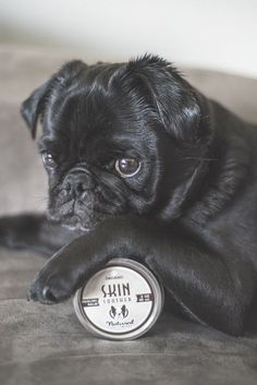 12 Essential Products for Your Pug http://www.thepugdiary.com/12-essential-products-pug/