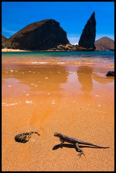 Galapagos Islands, Ecuador    http://www.100placestovisit.com/galapagos-islands-ecuador-south-america/    #GalapagosIslands #Ecuador #travel #bucketlist #seebeforeyoudie #100places2visit