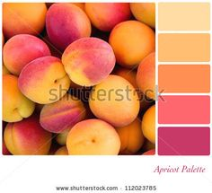 Apricot background colour palette with complimentary swatches. - stock photo