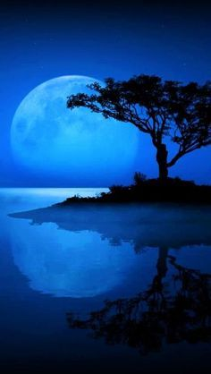 Blue Moon / Water / Silhouette of Tree Beautiful Moon, Beautiful World, Beautiful Places, Moon Pictures, Pretty Pictures, Moon Images, Blue Pictures, Wallpaper Photo Gallery, Ciel Nocturne
