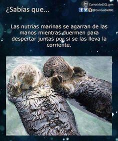 (9) Fotos subidas con el móvil - PRO-SETTER España (Asociación Protectora del Setter y Perros de Caza)