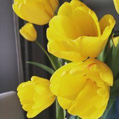 Huomenta. Herättiin iltapäivällä ja tassuteltiin aamupalalle keittiöön joka hehkui maailman ihanimman kotimaisen kevätauringon loisteessa.  #tulppaani #tulips #koti #myhome #omakoti #vapaapäivä #aikaerostasekaisin #sun #aurinko #kevät