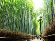 BeautifulNow is Beautiful Now   10 Beautiful Forests to Consider Now
