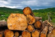 Timber Companies, Forest Resources, Logs, Washington State, Old Things, Magazines
