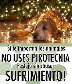 tratemos de celebrar navidad  y festejar año nuevo SIN PIROTECNIA.-SUMATE A LA CAMPAÑA (por los sin voz,los abus y los bebes)NO USES PIROTECNIA!!!!!