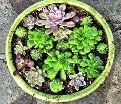 How to make a Succulent Dish Garden