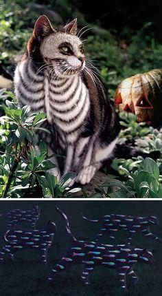 Livro - Why Paint Cats: The Ethics of Feline Aesthetics (Os gatos foram todos coloridos digitalmente)
