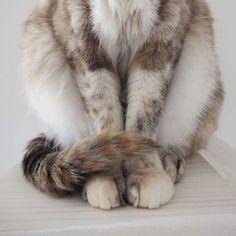 .  お行儀よろし♡  スライドしてね☞  .  .  #mofmo#nekoclub#ペコねこ部#フェリシモ猫部#ねこのいる生活#にゃんすたぐらむ#picneko#eclatcat#ピクネコ#pecon#9gag