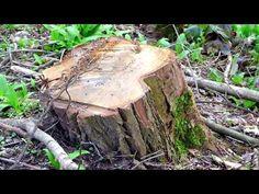Jak pozbyć się pnia po ściętym drzewie? Fenomenalny sposób! - YouTube Crafts, Gardening, Youtube, Diy, Manualidades, Bricolage, Lawn And Garden, Do It Yourself, Handmade Crafts