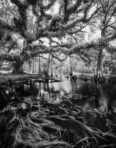 Fisheating Creek by Paul Marcellini on 500px