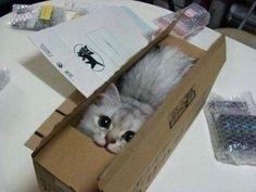 クロネコで送られるネコ