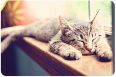 cute kitty. dawwwwwwwwwwww