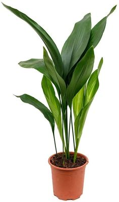 Herb Garden Kit, Lawn And Garden, Veg Garden, Best Herbs To Grow, Cast Iron Plant, Kitchen Plants, Fast Growing Plants, Jade Plants, House Plant Care