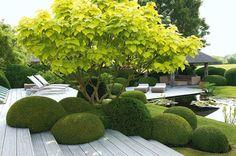 Garden - Buxus & Catalpa