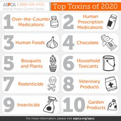 Top 10 Pet Toxins of 2020 | ASPCApro Cold And Flu Medicine, Mouse Poison, Cold Medication, Pet Health Insurance, Pet Safe, Medical Prescription, Looking For Love, Cute Animal Pictures, Pets