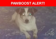 Please spread the word! Molly was last seen in Palm Bay, FL 32908.  Description: Mini jack russell..10 lbs...mostly white..  Nearest Address: Wlldwood Ave palm bay FL, United States