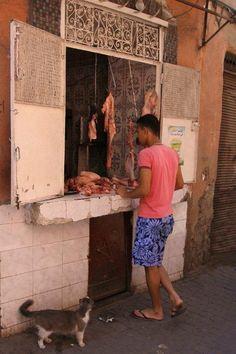 Marrakech cat - Marrakesh, Marrakech