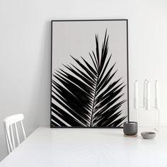 lámina botánica con dibujo de hoja de palmera inuk home