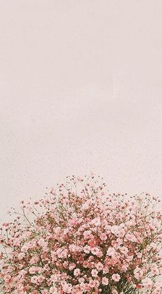 fond d& flores IPhone Background Pictures, Spring - Inside Korea J . Tumblr Wallpaper, Flor Iphone Wallpaper, Wallpaper Pastel, Frühling Wallpaper, Flower Background Wallpaper, Spring Wallpaper, Phone Screen Wallpaper, Sunflower Wallpaper, Aesthetic Pastel Wallpaper