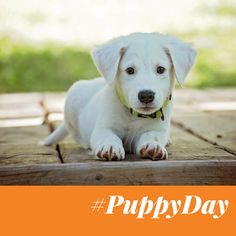 🐶🐶🐶 It's #NationalPuppyDay!!! 🙌🙌🙌 Tag a #puppy lover or comment with pictures of your puppies below 👇 #dogs #cute #HealthyPetsInsurance #fidofriday
