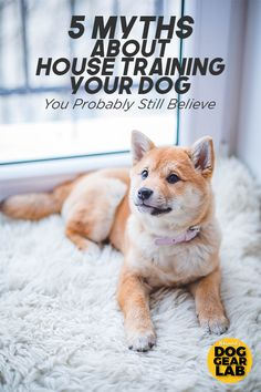 Benefits of Boarding your Dog vs. Using a Pet Sitter - Other People's Pets Training Your Puppy, Dog Training Tips, Potty Training, Agility Training, Training Classes, Training Videos, Dog Agility, Puppy Training Schedule, Rugby Training