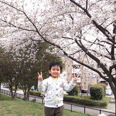 With Sakura