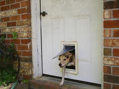 Doggie Door Wood