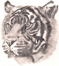 Note Card Tiger