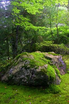 The Temple of the Peaceful Dragon Mother Earth, Mother Nature, Beautiful World, Beautiful Places, Landscape Photography, Nature Photography, Travel Photography, Moss Garden, Woodland Garden