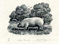 wood engraving by Andrew Davidson - Tinsmiths Pig Art, Animal Magic, Wood Engraving, Printmaking, Masters, Imagination, Moose Art, Cotton Fabric, Palette