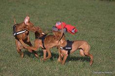 teaching the pups