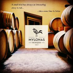 Meet a small yet modern winery striving daily for the creation of wines that through their taste introduce us to the beauties of the land of Attica; Mylonas Winery. Let's hear the story that this little bird has to say! The GW Attica Yellow wine routes await you!  #atticayellow #gw_winetrips #winedestinations #winetravel #greekwineries #winelovers #attica #greece #greekwine #mylonaswinery #greekwineculture Attica Greece, Small Birds, Gw, Wineries, Ancient Greek, Tour Guide, Creative Design, Meet, Culture