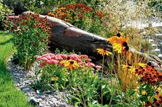 Dominantou záhonu ve svahu je mohutný dubový kmen dovezený přímo z lesa.
