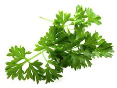 Herb of the Month: Parsley